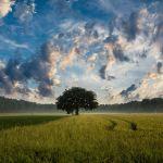 ancrage et arbre