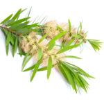 inhalation huile essentielle niaouli nez bouché