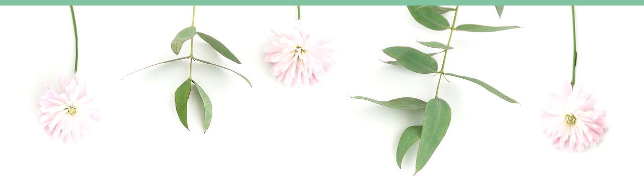flowers-2300514_12820.jpg